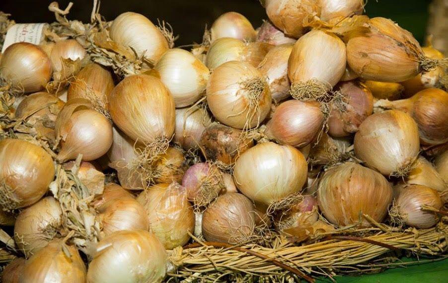 cipolla - Una giornata dedicata ai laboratori di Intrecciata della cipolla di Vatolla