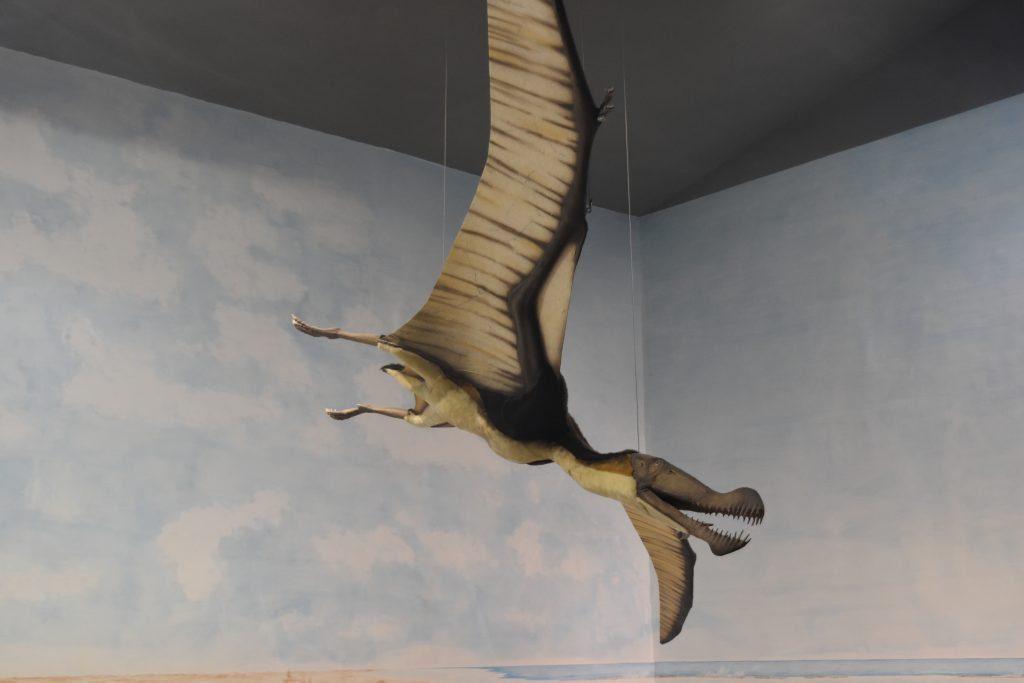 Il Museo Paleontologico di Magliano Vetere – foto