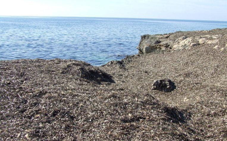 posidonia - Posidonia spiaggiata: il parere del WWF