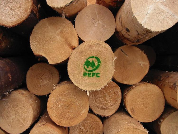 Giornata internazionale foreste, alleate del clima e della biodiversità