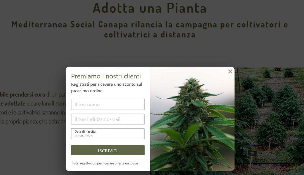 """adotta 1024x592 - Canapa cilentana, l'iniziativa """"Adotta una pianta"""""""