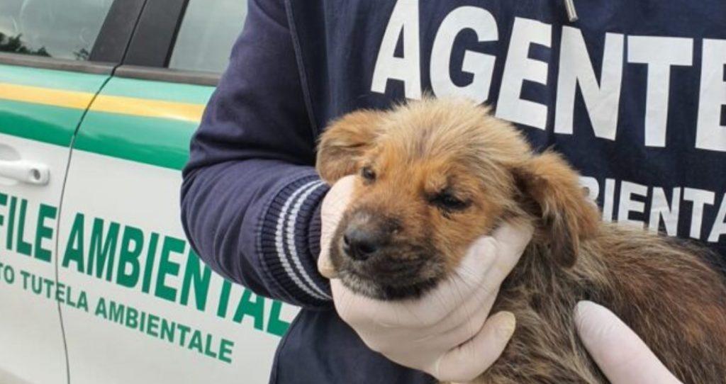 cagnolino 1024x542 - Cagnolino di 2 mesi, ritrovato in un rovo tra Agropoli e Torchiara cerca padrone
