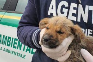 Cagnolino di 2 mesi, ritrovato in un rovo tra Agropoli e Torchiara cerca padrone
