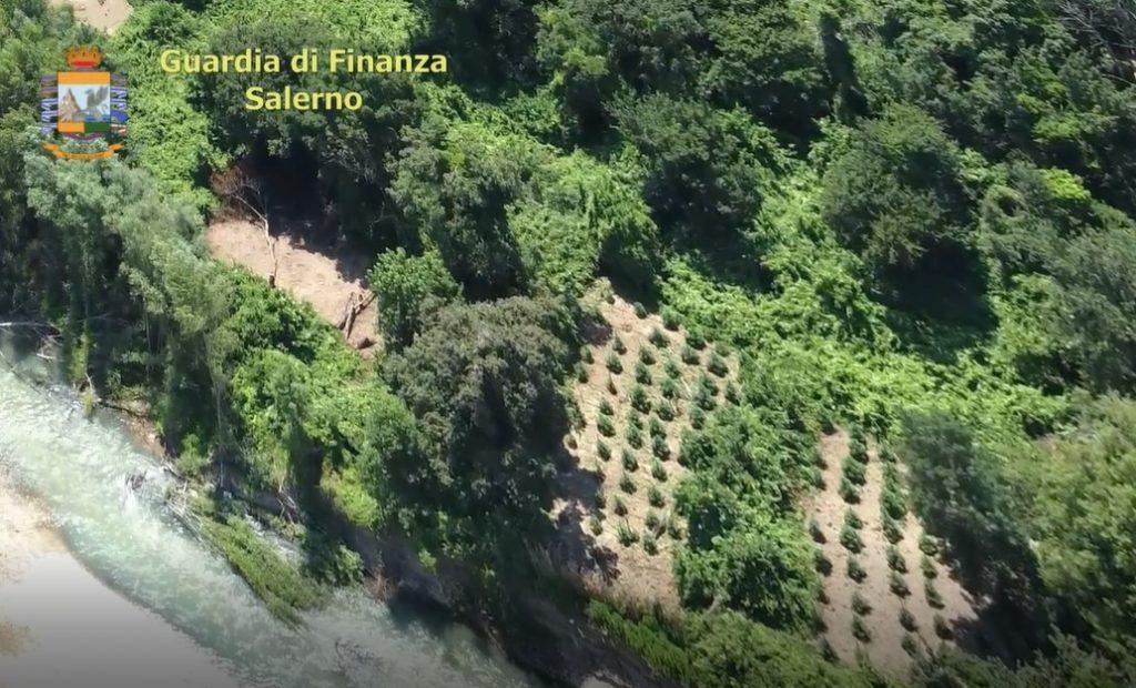 GdF, sequestrate due piantagioni nella piana del Sele