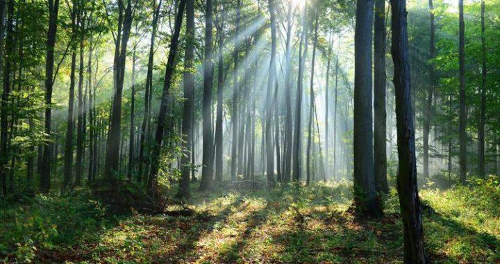Onu: ripristinare un miliardo di ettari di terreno in dieci anni