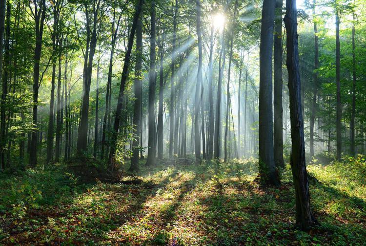 foresta 2 ftlia - Onu: ripristinare un miliardo di ettari di terreno in dieci anni